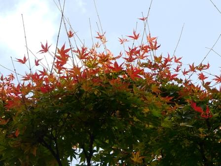 松山総合公園 紅葉 7