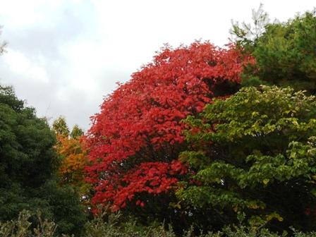 松山総合公園 紅葉 8
