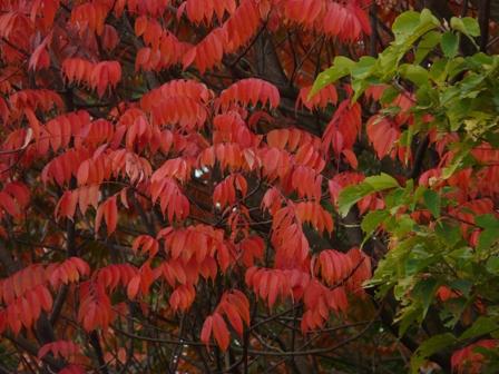 松山総合公園 紅葉 9