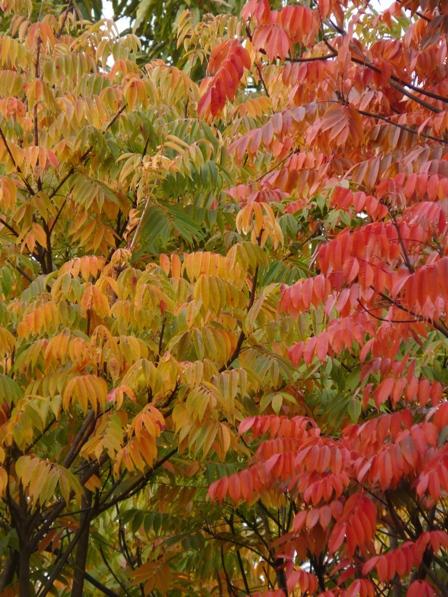 松山総合公園 紅葉 10