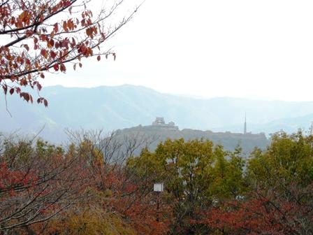 松山総合公園 紅葉 12