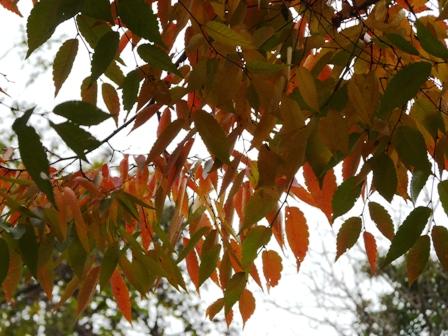 松山総合公園 紅葉 14