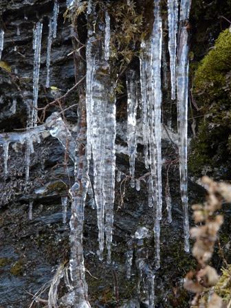瓶ヶ森林道 氷柱 2