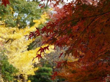 森の交流センター 紅葉 4