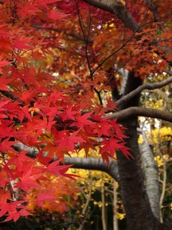 森の交流センター 紅葉 7