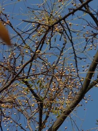 森の交流センター センダン の実