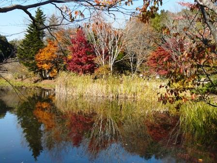 筑波実験植物園 池に映る紅葉 1