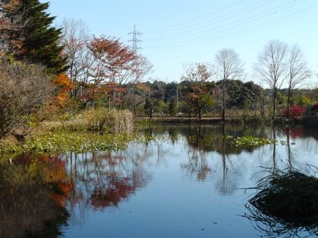 筑波実験植物園 池に映る紅葉 2