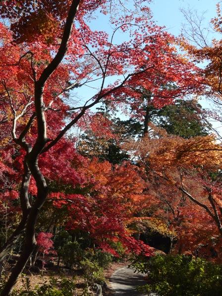 筑波山 ケーブルカー宮脇駅付近の紅葉 3