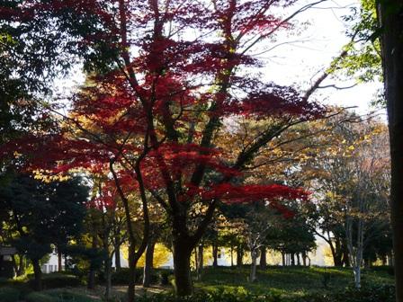 つくば市 中央公園 紅葉 1