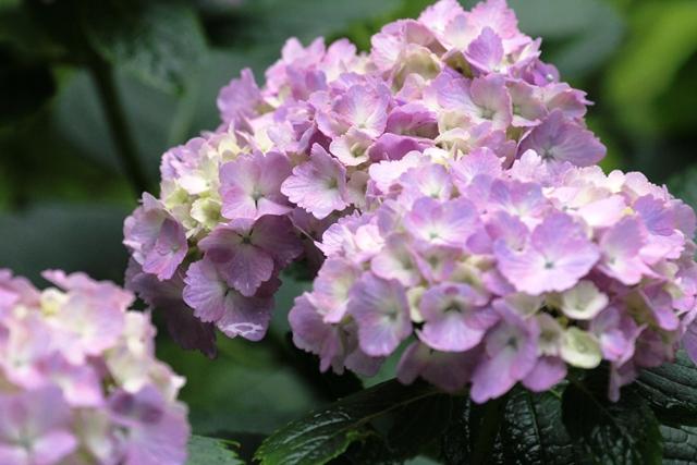 197_20120715230317.jpg