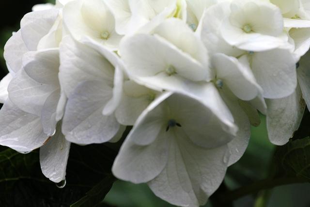 201_20120715230316.jpg