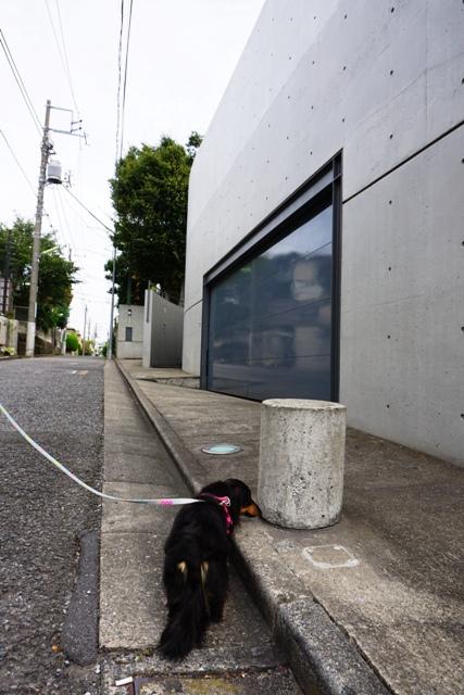 地元散歩 (2)