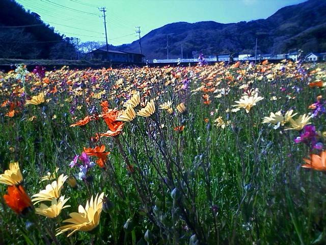 0315花畑