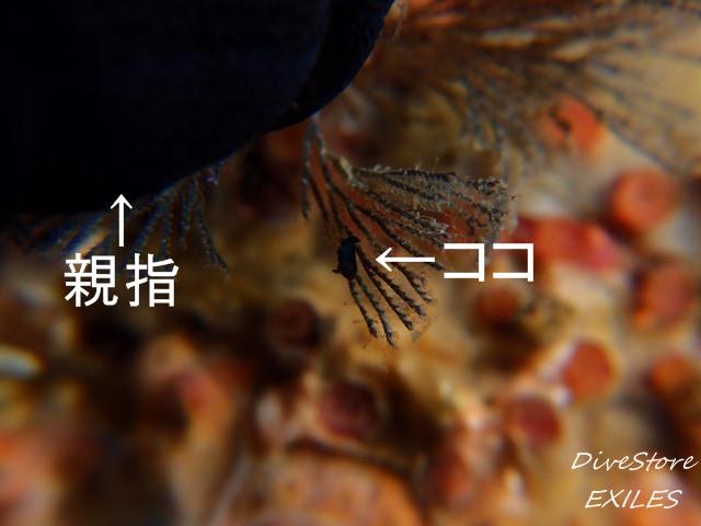 33_1122komi2.jpg