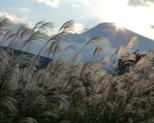 ばんちゃんの旅案内 -日本全国自走の旅--富士山とススキ