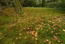 ばんちゃんの旅案内 -日本全国自走の旅--兼六園の苔