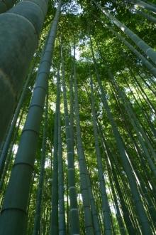 ばんちゃんの旅案内 -日本全国自走の旅--報告寺 竹の庭