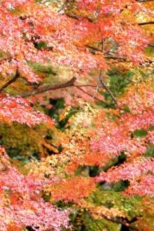 ばんちゃんの旅案内 -日本全国自走の旅--定光寺