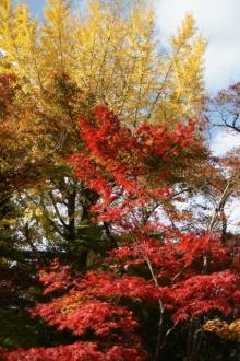 ばんちゃんの旅案内 -日本全国自走の旅--永観堂4