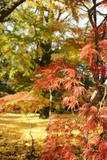 ばんちゃんの旅案内 -日本全国自走の旅--永観堂1