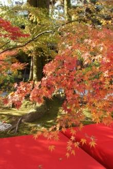 ばんちゃんの旅案内 -日本全国自走の旅--永観堂3