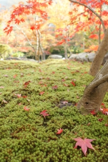 ばんちゃんの旅案内 -日本全国自走の旅--永観堂2