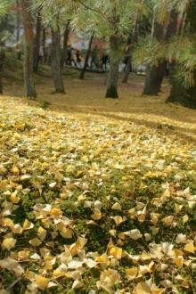ばんちゃんの旅案内 -日本全国自走の旅--南禅寺2