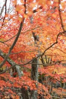 ばんちゃんの旅案内 -日本全国自走の旅--化野念仏寺3
