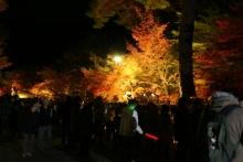 ばんちゃんの旅案内 -日本全国自走の旅--永観堂ライトアップ1