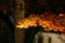 ばんちゃんの旅案内 -日本全国自走の旅--永観堂ライトアップ2
