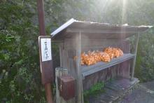 ばんちゃんの旅案内 -日本全国自走の旅--路上100円ショップ