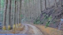 ばんちゃんの旅案内 -日本全国自走の旅--酷道436号線