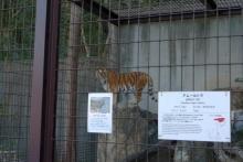 ばんちゃんの旅案内 -日本全国自走の旅--東山動植物園トラ