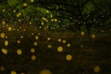 ばんちゃんの旅案内 -日本全国自走の旅--ヒメボタル