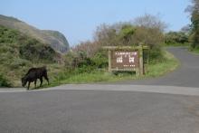 ばんちゃんの旅案内 -日本全国自走の旅--放牧牛