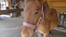 ばんちゃんの旅案内 -日本全国自走の旅--木曽馬