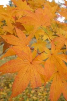 ばんちゃんの旅案内 -日本全国自走の旅--紅葉