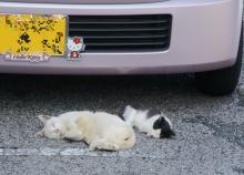 ばんちゃんの旅案内 -日本全国自走の旅--無防備なネコ
