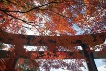 ばんちゃんの旅案内 -日本全国自走の旅--胡宮神社