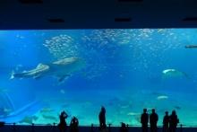 ばんちゃんの旅案内 -日本全国自走の旅--美ら海水族館