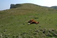 ばんちゃんの旅案内 -日本全国自走の旅--放牧馬
