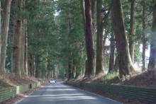 ばんちゃんの旅案内 -日本全国自走の旅--日光杉並木