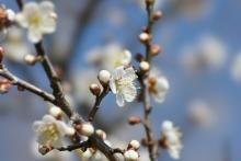 ばんちゃんの旅案内 -日本全国自走の旅--月ヶ瀬梅園
