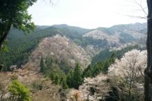 ばんちゃんの旅案内 -日本全国自走の旅--一目千本
