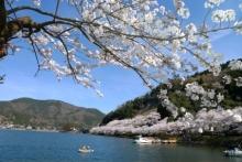 ばんちゃんの旅案内 -日本全国自走の旅--海津大崎の桜