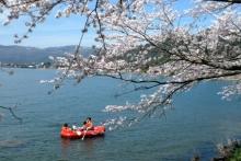ばんちゃんの旅案内 -日本全国自走の旅--ボートで花見