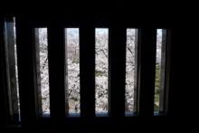ばんちゃんの旅案内 -日本全国自走の旅--松本城内からの桜