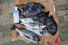 ばんちゃんの旅案内 -日本全国自走の旅--海の日企画-魚突き