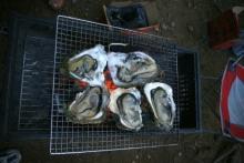 ばんちゃんの旅案内 -日本全国自走の旅--海の日企画-イワガキ
